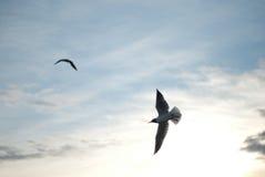 Il volo del gabbiano sul cielo Fotografie Stock