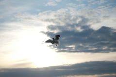 Il volo del gabbiano sul cielo Immagini Stock