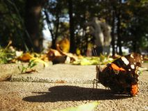 Il volo dell'autunno scorso fotografia stock libera da diritti