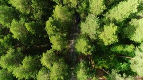 Il volo dell'occhio dell'uccello sopra l'albero completa la mostra della strada nascosta nell'oscurità della foresta archivi video