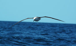 Il volo lungo Fotografia Stock
