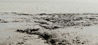 Il wadden Germania marina Immagini Stock