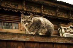Il Watchcat Immagine Stock