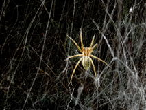 Il web del ` s del ragno e del ragno annerisce il fondo fotografia stock