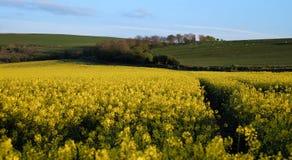 Il Wiltshire Fotografia Stock