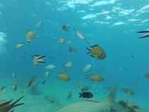 Il y a d'abondance des poissons en mer Images stock