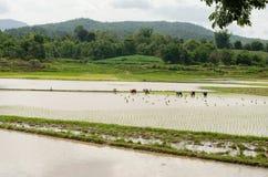 Il y a des agriculteurs travaillant dans la ferme images libres de droits