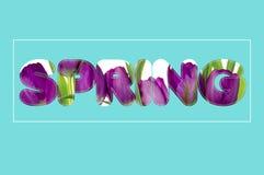 Il y a texte de fleurs au printemps Photographie stock libre de droits