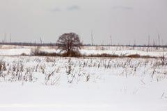 Il y a un arbre sur le champ neigeux image libre de droits