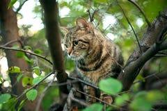 Il y a un chat sur un arbre photo libre de droits
