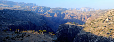 Il Yemen. Isola di socotra. Plateau Dixam Fotografia Stock Libera da Diritti