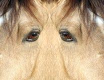 Il Yeti: sono un mostro? Fotografia Stock