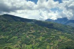 Il Yungas, Bolivia Fotografie Stock Libere da Diritti