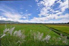 Il Yunnan Dali della Cina Immagini Stock Libere da Diritti