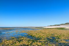 Ile de Ré - North coast Stock Photography