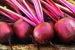 Зile of homegrown organic beets with leaves royalty free stock images