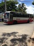 Ile Maurice del bus Fotografia Stock