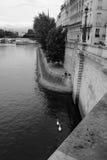 Ile St. Louis y cygnes Imagen de archivo libre de regalías