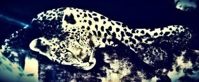 ILeopard målarfärg Arkivfoton