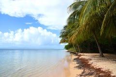 Ilet caret in guadeloupe. Landscape paradise of ilet caret in guadeloupe stock photo