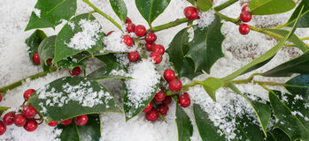 Ilex Aquifolium και χιόνι Στοκ Φωτογραφίες