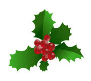 Ilex aquifolium - Branch of Holly with red berri Royalty Free Stock Photo