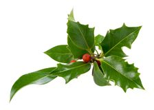 Ilex, holly, christmas decoration. Isolated on white, ilex, holly, christmas decoration royalty free stock photos