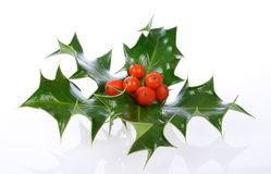 Ilex,holly, christmas decoration. Ilex isolated on white, holly, christmas decoration royalty free stock image