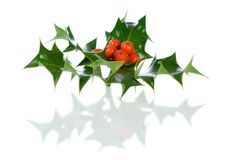 Ilex,holly, christmas decoration isolated on white Royalty Free Stock Images
