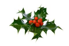 Ilex,holly isolated on white Royalty Free Stock Photography