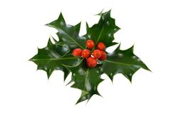 Ilex, hulst, Kerstmisdecoratie Royalty-vrije Stock Foto