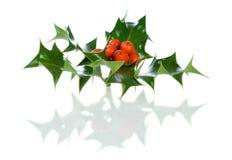 Ilex, hulst, Kerstmisdecoratie die op wit wordt geïsoleerdo Royalty-vrije Stock Afbeeldingen