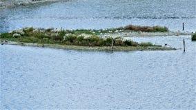A ilha anônimo no lago imagem de stock
