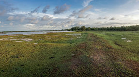 Ilha Brasil de Marajo Fotos de Stock