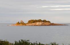 Ilha coberta com os pinheiros Fotos de Stock Royalty Free