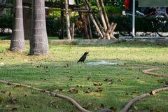 Ilha da pega em uma mangueira velha Imagens de Stock