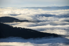 Ilha das árvores em um mar da névoa Foto de Stock Royalty Free