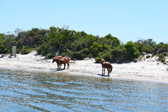 Ilha de Assateague, Maryland Fotos de Stock Royalty Free