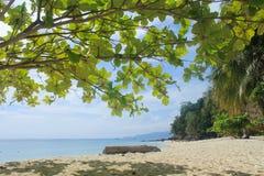 Ilha de bambu Fotos de Stock Royalty Free