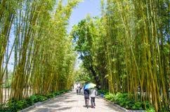 Ilha de bambu do bosque que é uma da área cênico no parque verde Cui Hu Park do lago imagem de stock