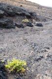 Ilha de Canaries Imagens de Stock Royalty Free