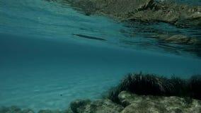 Ilha de deserto, ambiente não contaminado subaquático, maravilha da natureza video estoque
