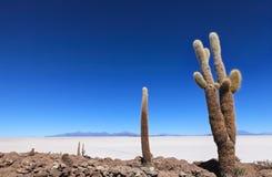 Ilha de Incahuasi Fotos de Stock Royalty Free