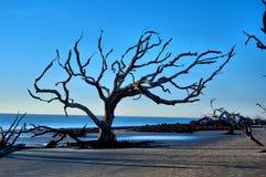 Ilha de Jekyll da praia da madeira lançada à costa, Geórgia fotografia de stock royalty free