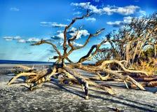 Ilha de Jekyll da praia da madeira lançada à costa, Geórgia imagens de stock