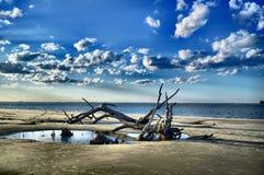 Ilha de Jekyll da praia da madeira lançada à costa, Geórgia Fotografia de Stock