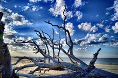 Ilha de Jekyll da praia da madeira lançada à costa, Geórgia foto de stock royalty free