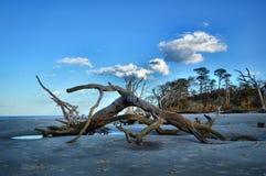 Ilha de Jekyll da praia da madeira lançada à costa, Geórgia fotos de stock
