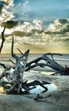 Ilha de Jekyll da praia da madeira lançada à costa, Geórgia foto de stock