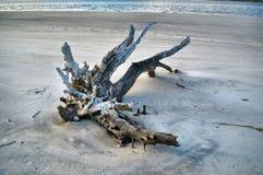 Ilha de Jekyll da praia da madeira lançada à costa, Geórgia imagem de stock